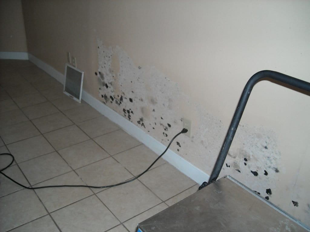 mold damage in providence