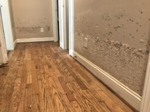 mold damage ri