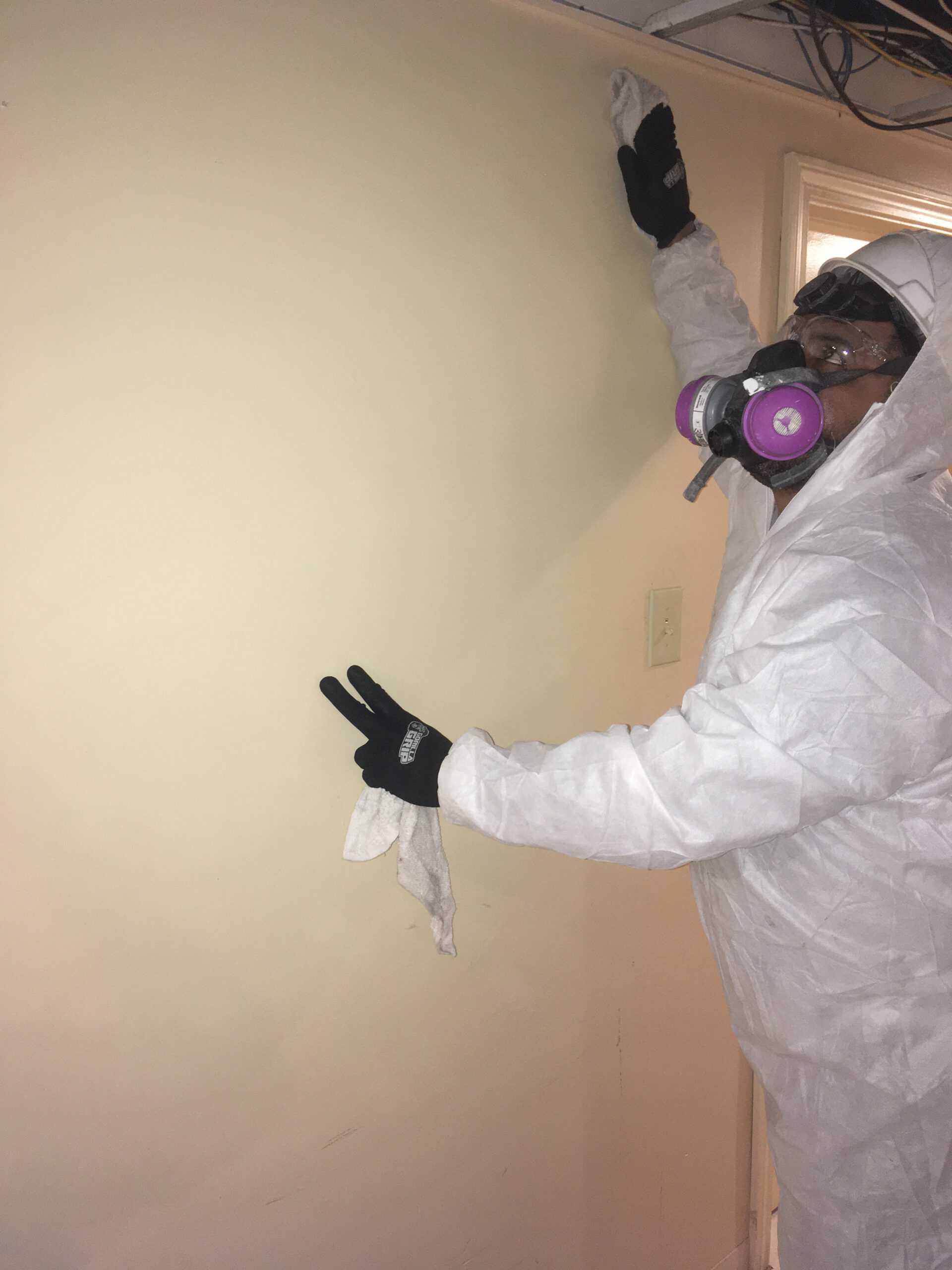 mold damage cleaning ri