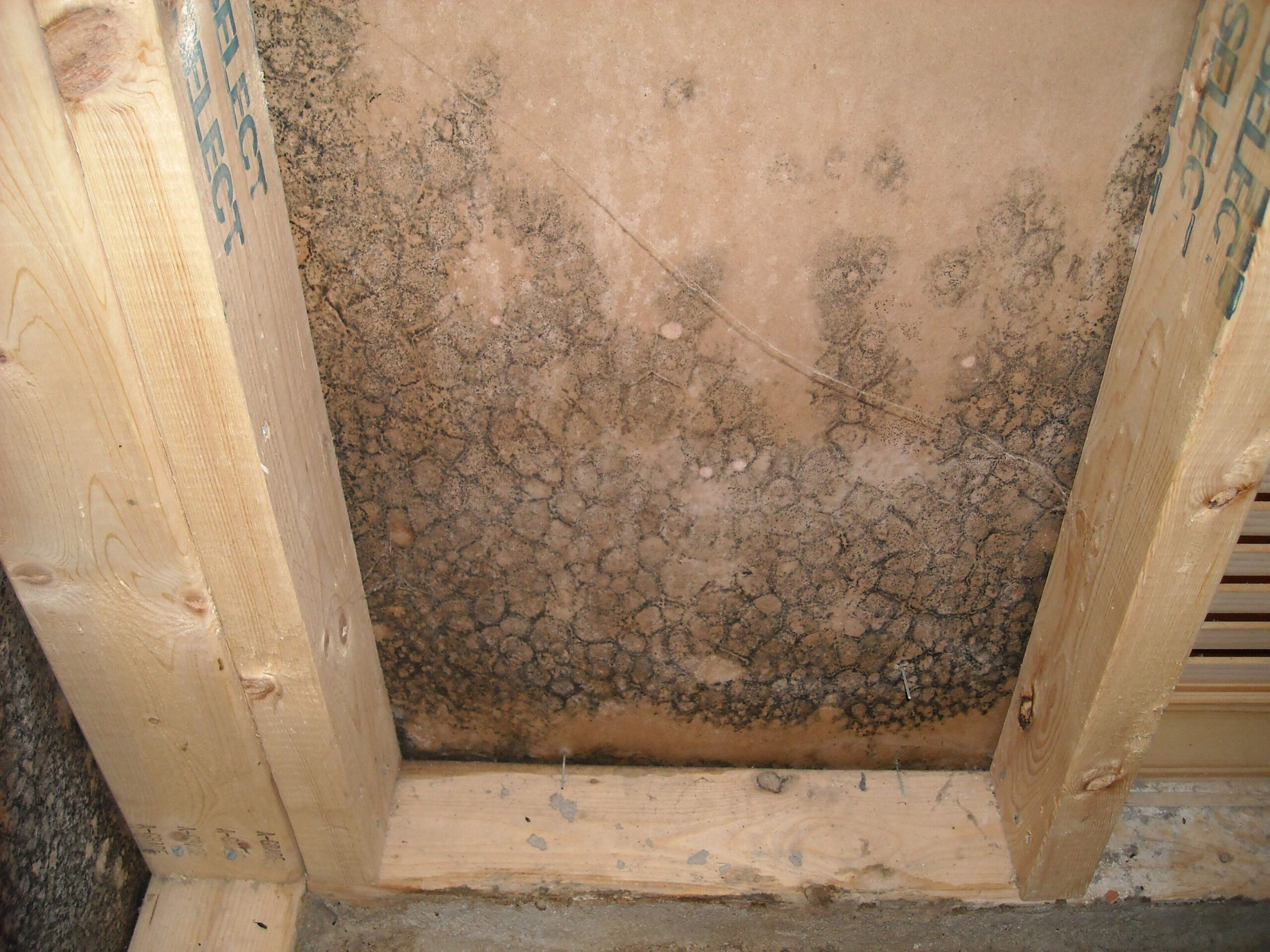 mold damage restoration in ri