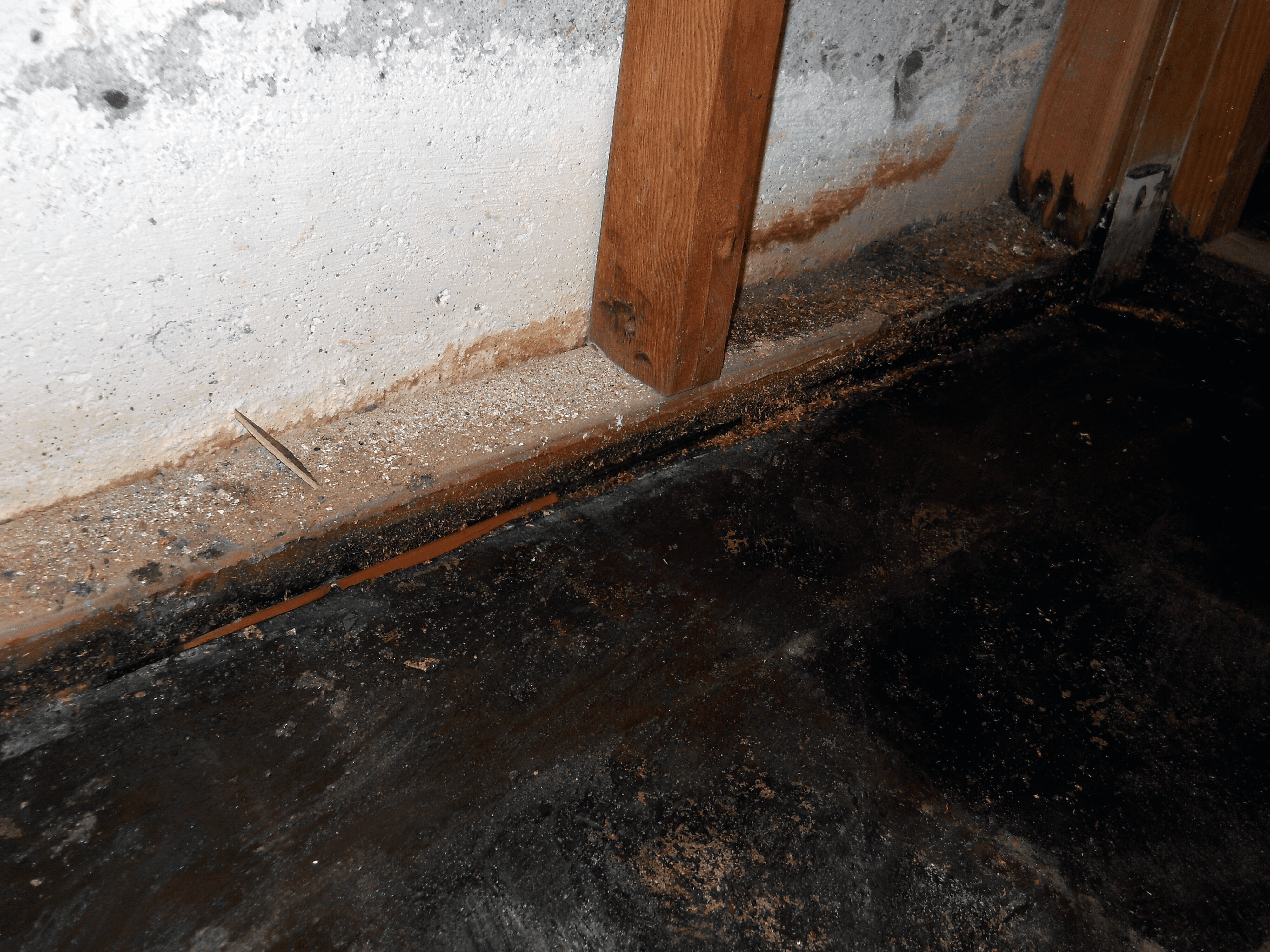 blackwater damage is the most dangerous type of water damage