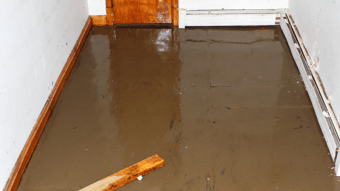 flood damage turned to mold damage