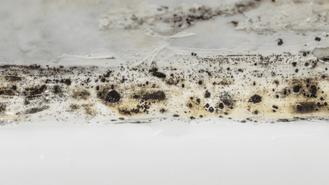 Top Ways to Identify and Eliminate Mold After Water Damage