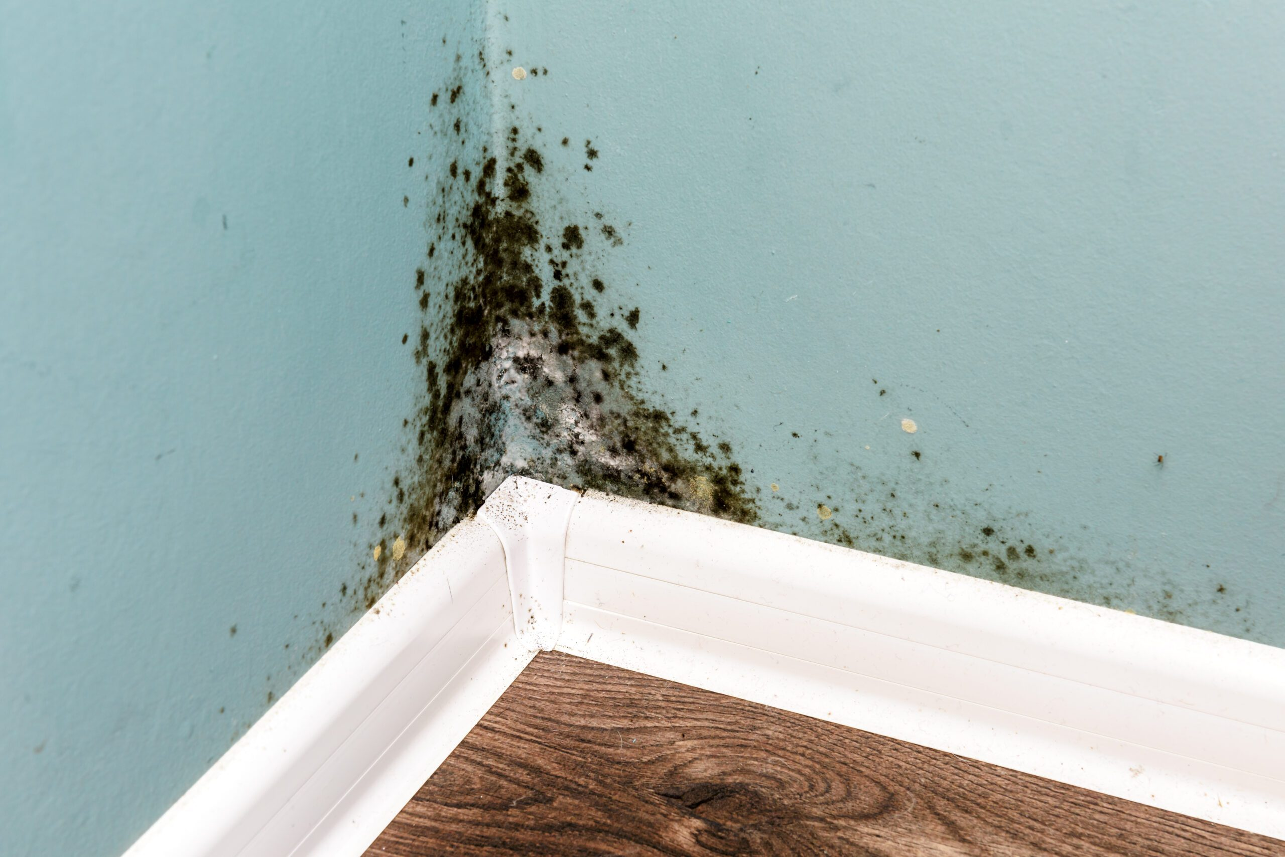 mold is sure to follow after new or old water damages
