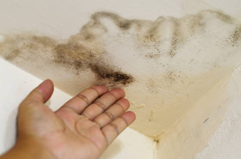 Feeling the spot of the water damage helps you know if its new or old water damage