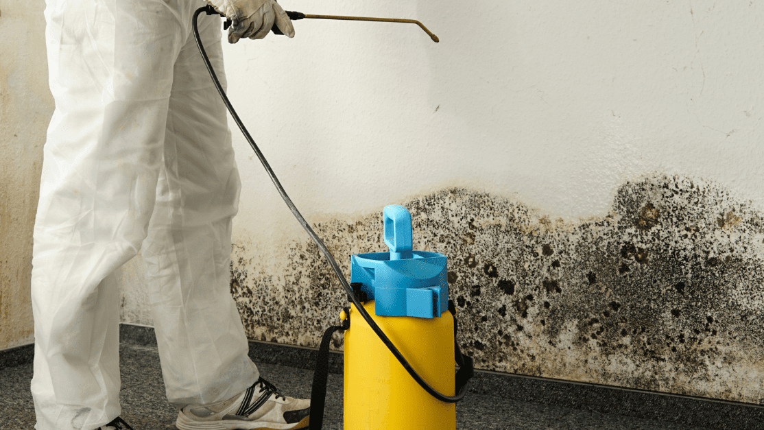 DIY Mold Removal vs. Professional Mold Remediation protective equipment professionals use to eliminate mold damage