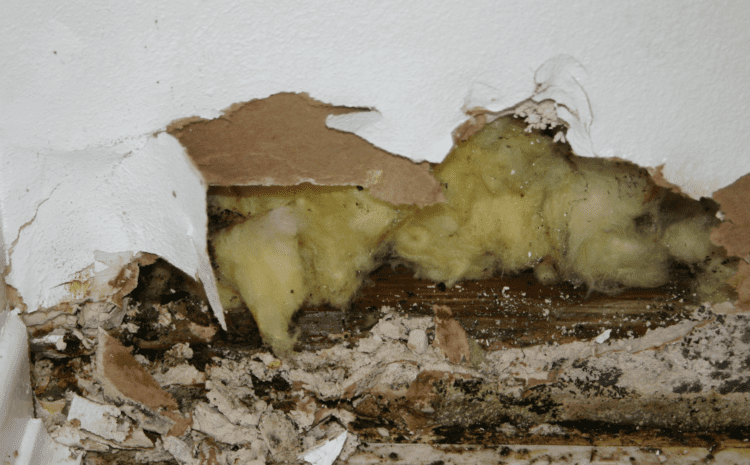 DIY Mold Removal vs. Professional Mold Remediation