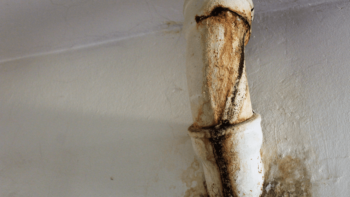 a pipe burst can cause significant water damage, leading directly to mold damage in your home or business