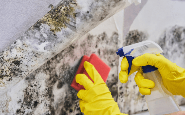 Common Household Mold And The Remediation Process