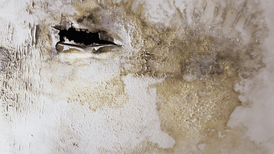 right after you notice the water damage, try to dry the area as much as possible. This is the first step to repair water damaged drywall ceiling