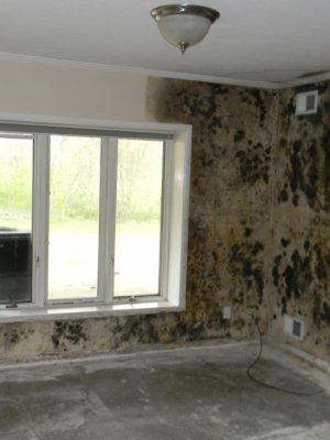 mold damage restoration ri